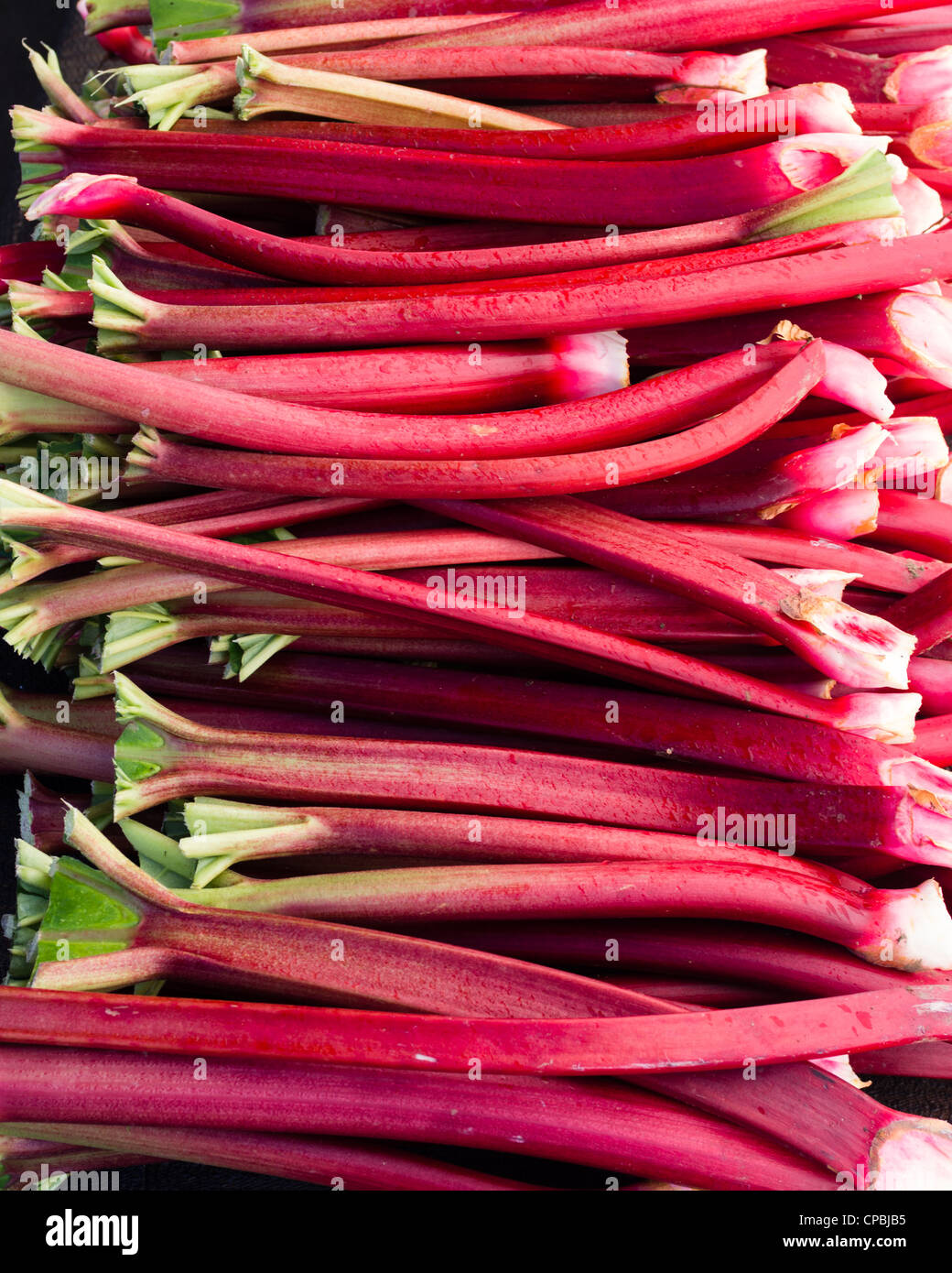 A display of red rhubarb stems harvested and ready to eat - Stock Image