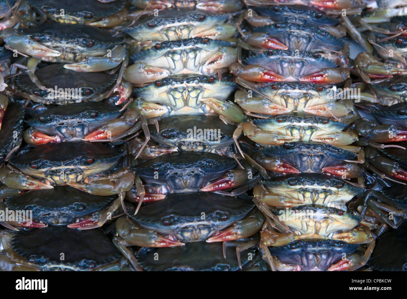 lots of fresh crabs for sale in the market - Stock Image