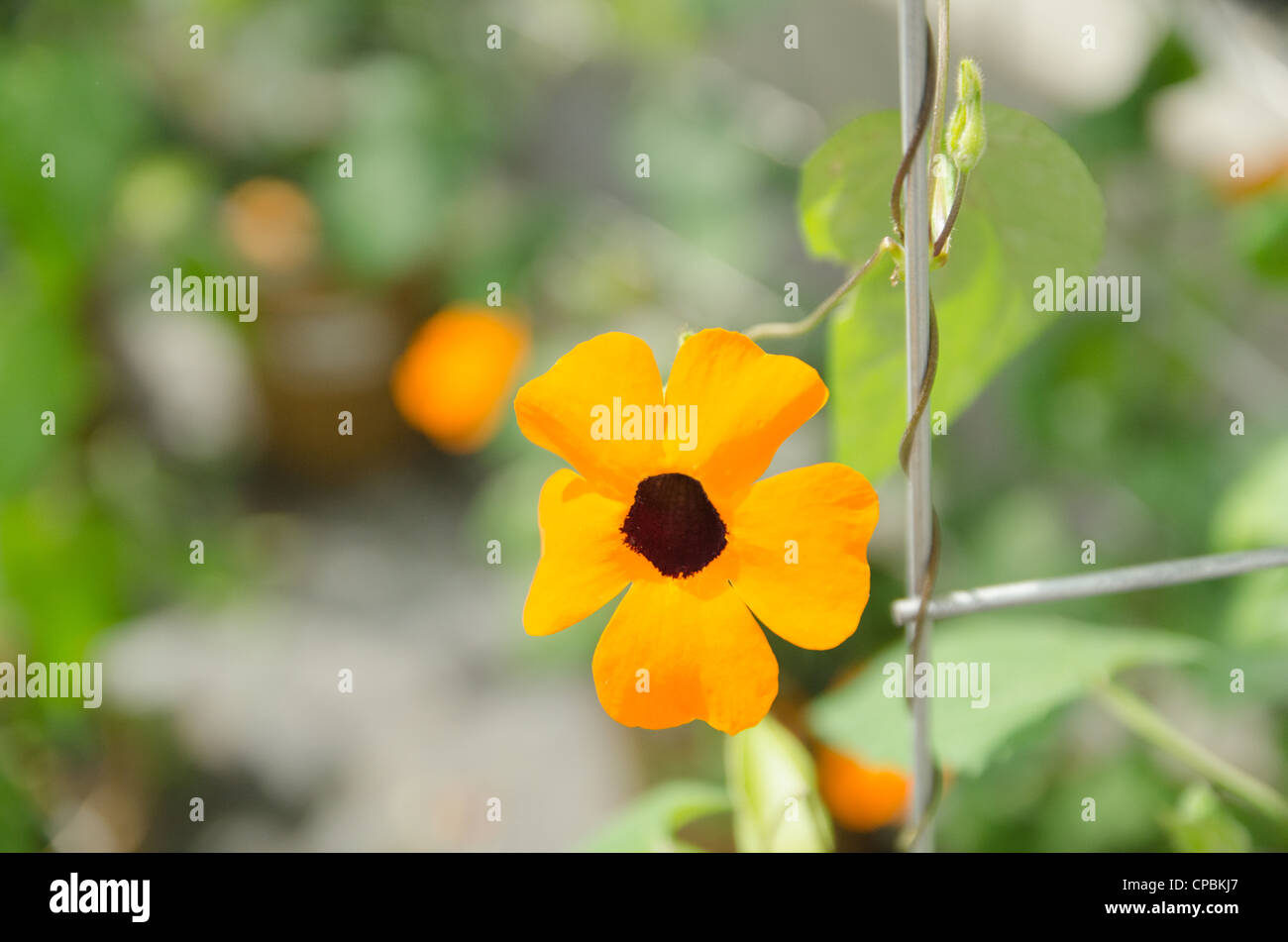 Orange Flower With Brown Center Growing In Greenhouse With Green
