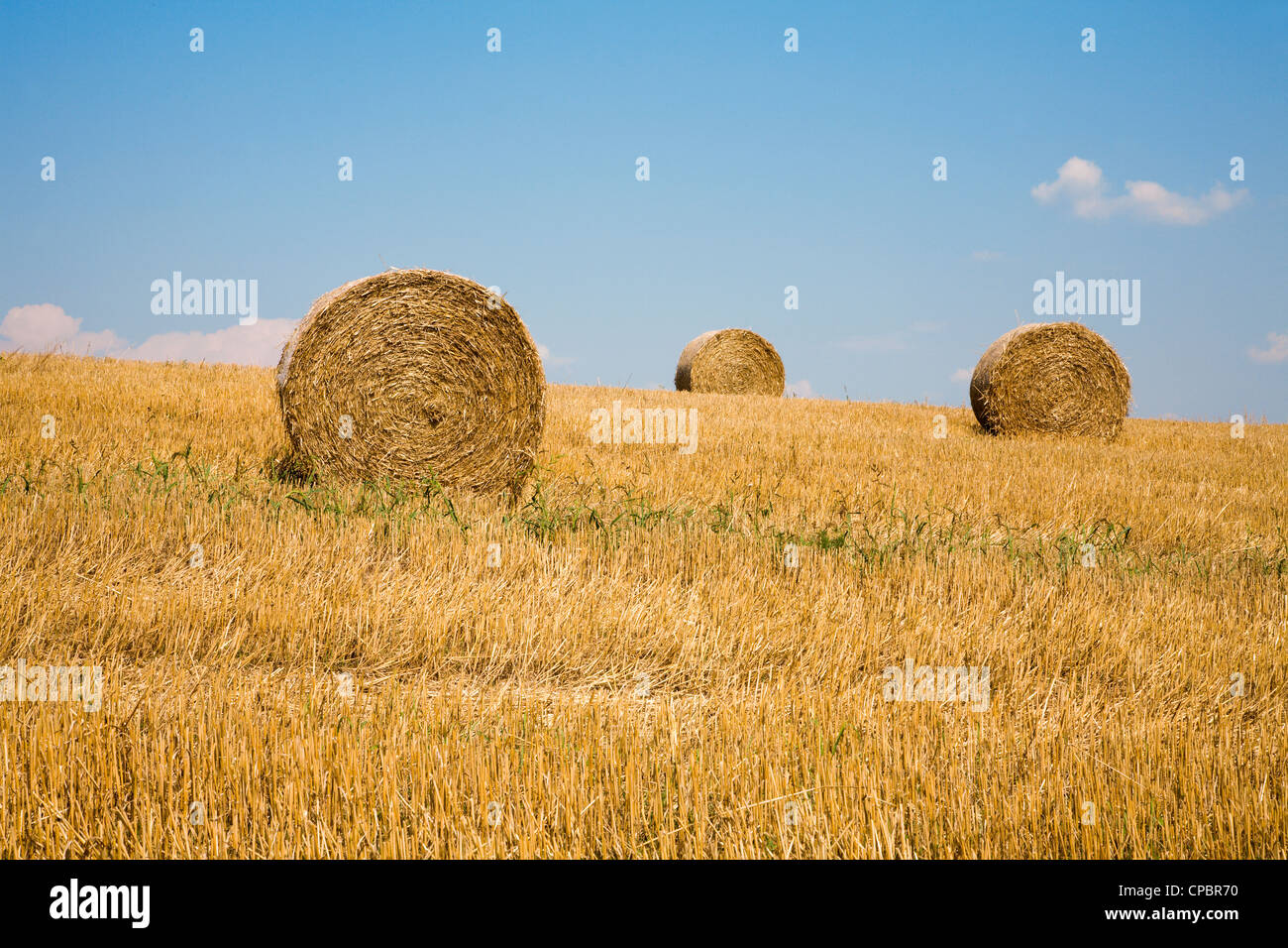 bale of the straw after harvest - Stock Image