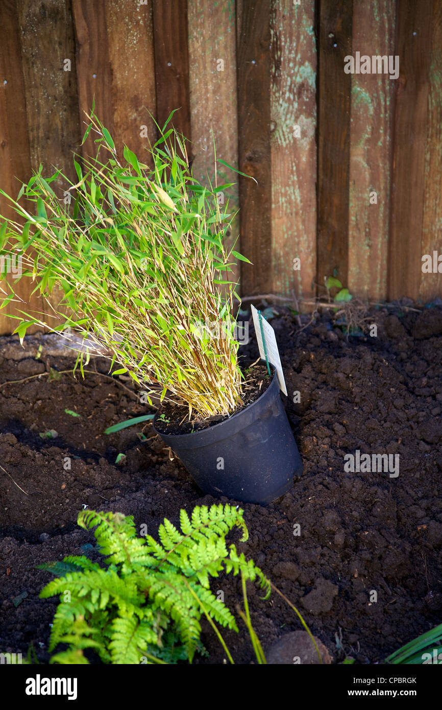 Bamboo Grass Waiting To Be Planted In A Prepared Garden Border With A Stock Photo Alamy