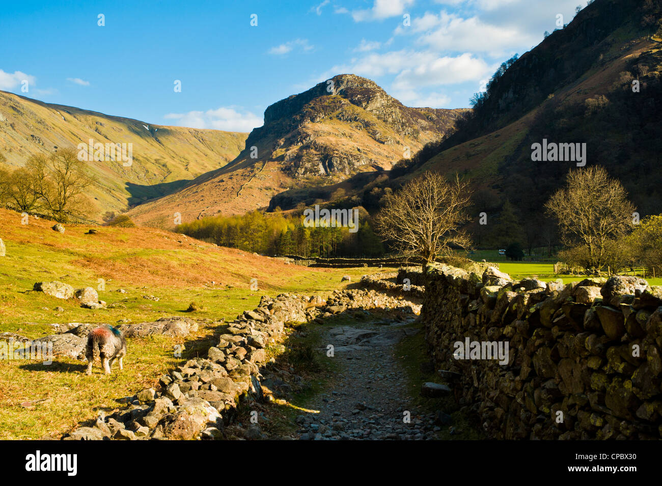 Stonethwaite valley a branch of Borrowdale Lake District looking towards Eagle Crag - Stock Image