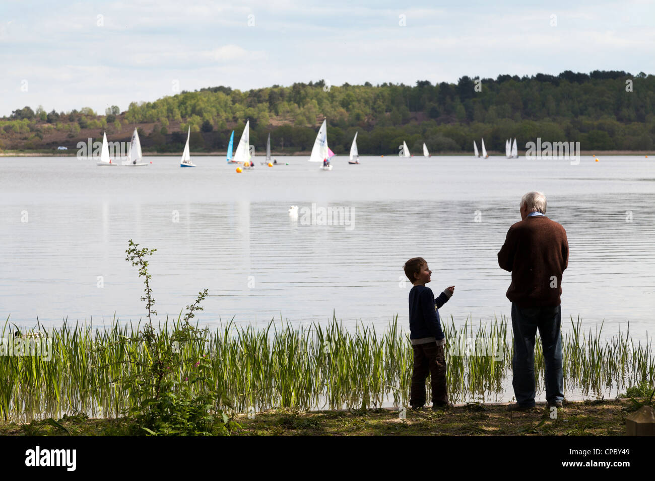 Grandfather and grandson feeding ducks at Frensham Pond with sail boats on lake. - Stock Image