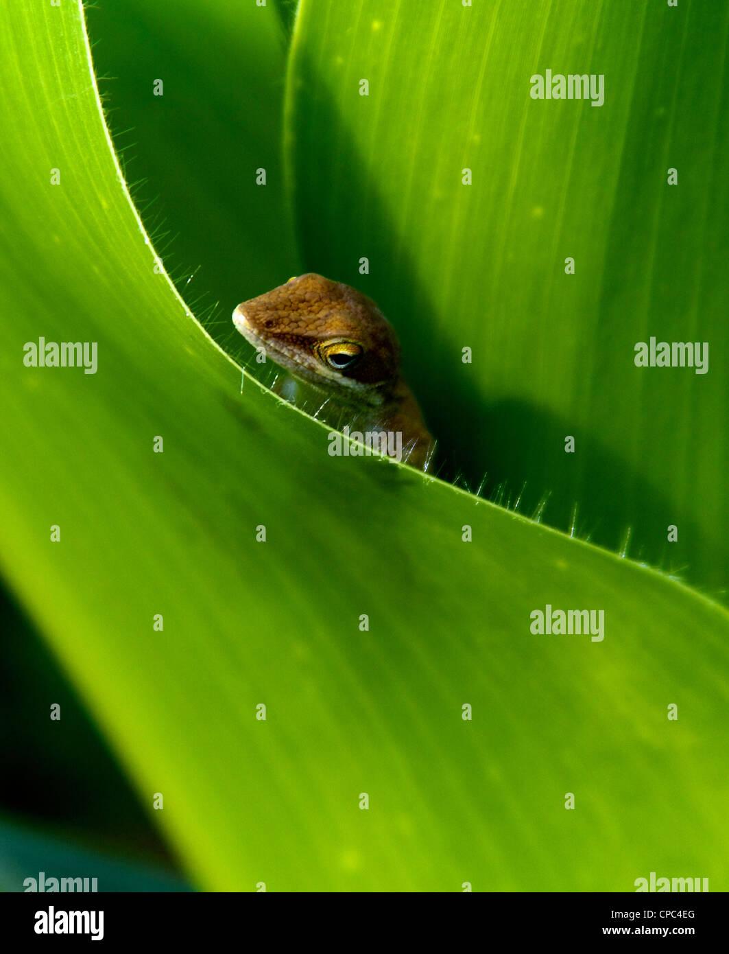 Green chameleon saying Hello - Stock Image