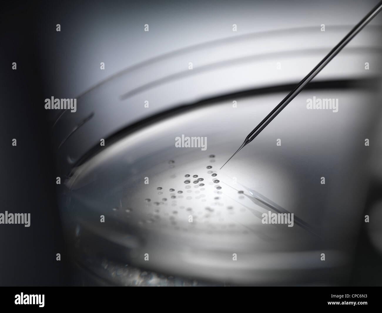 Micro pipette and cells in petri dish - Stock Image