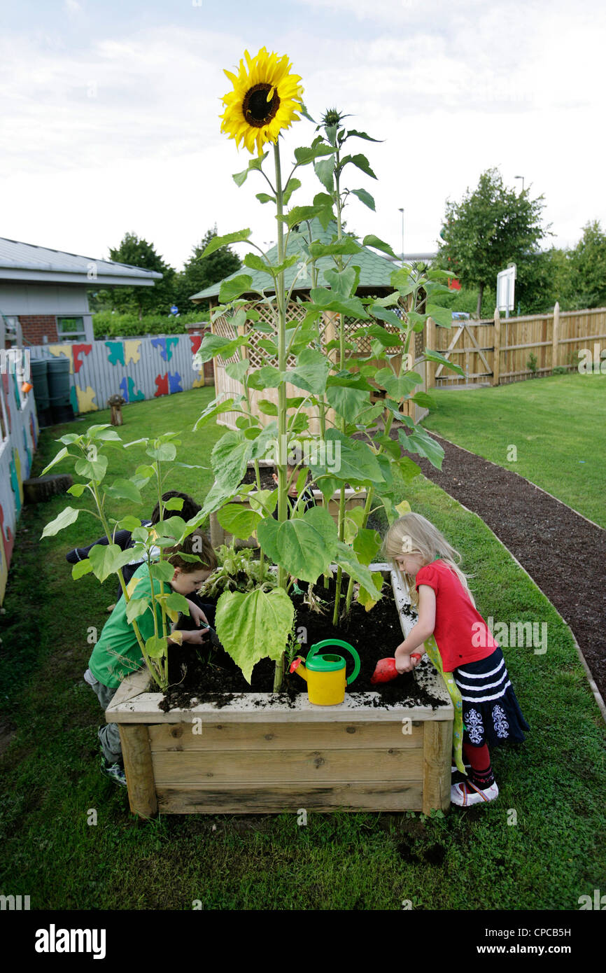 Children planting a sunflower at a school nursery in Birmingham, UK - Stock Image