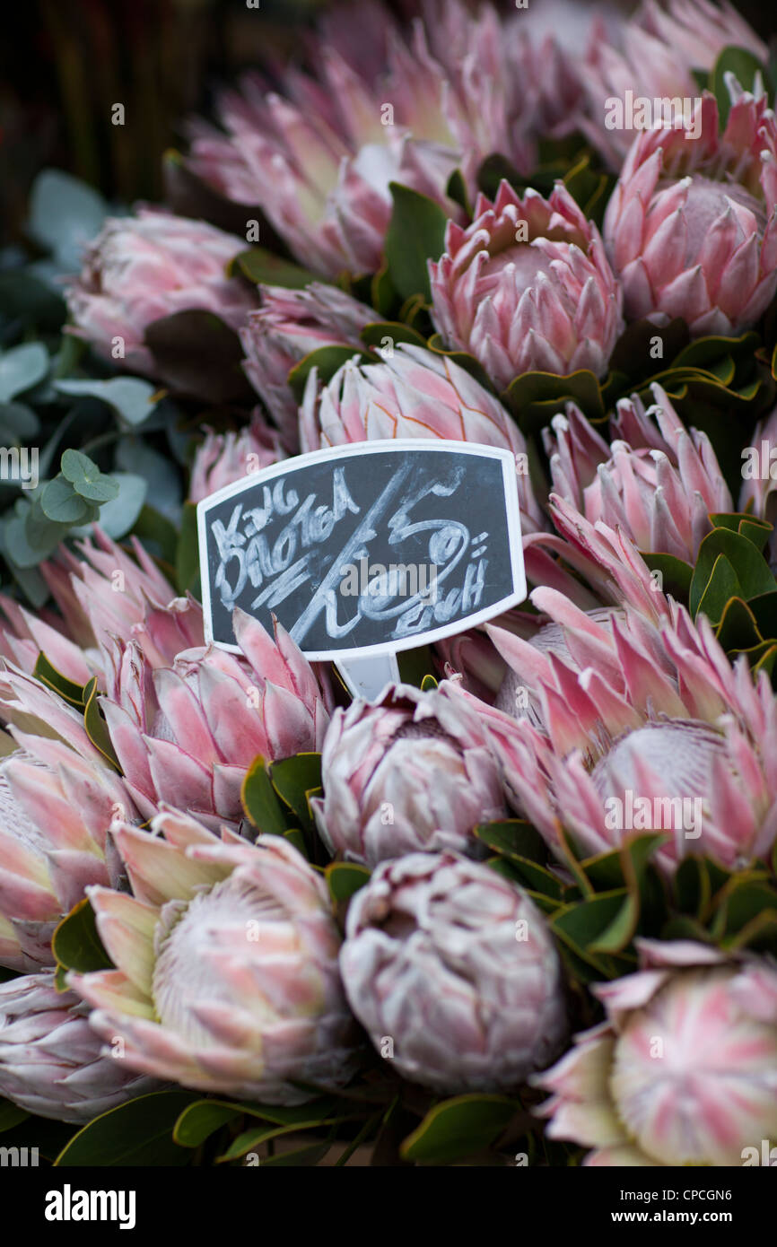 Columbia Road Flower Market - Stock Image