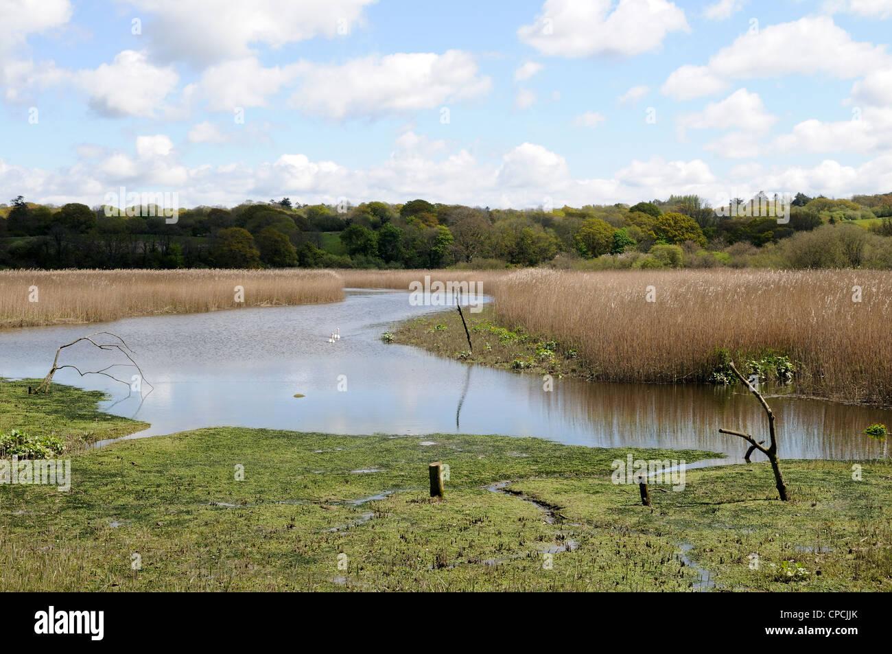 Teifi Marshes at  the Welsh Wildlife and Wetlands Centre Cilgerran Cardigan Wales Cymru UK GB Stock Photo