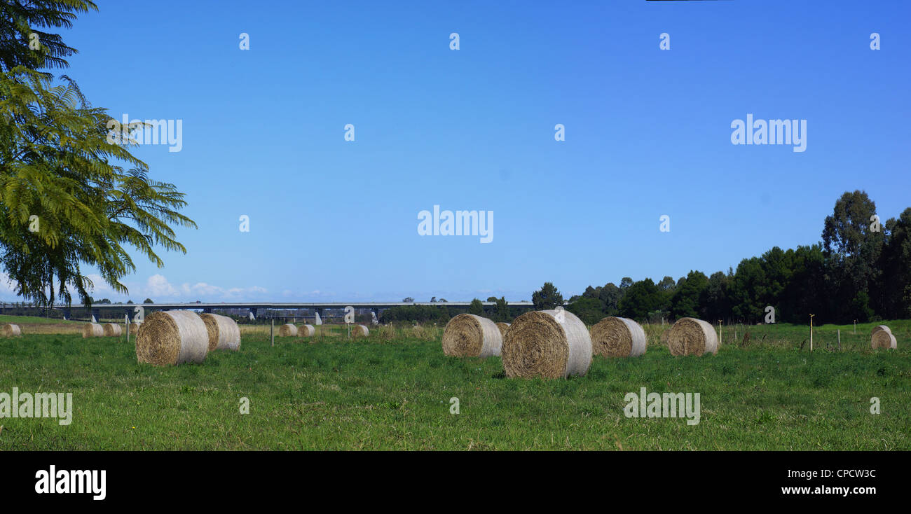 Hay bails in field - Stitched Panorama - Stock Image