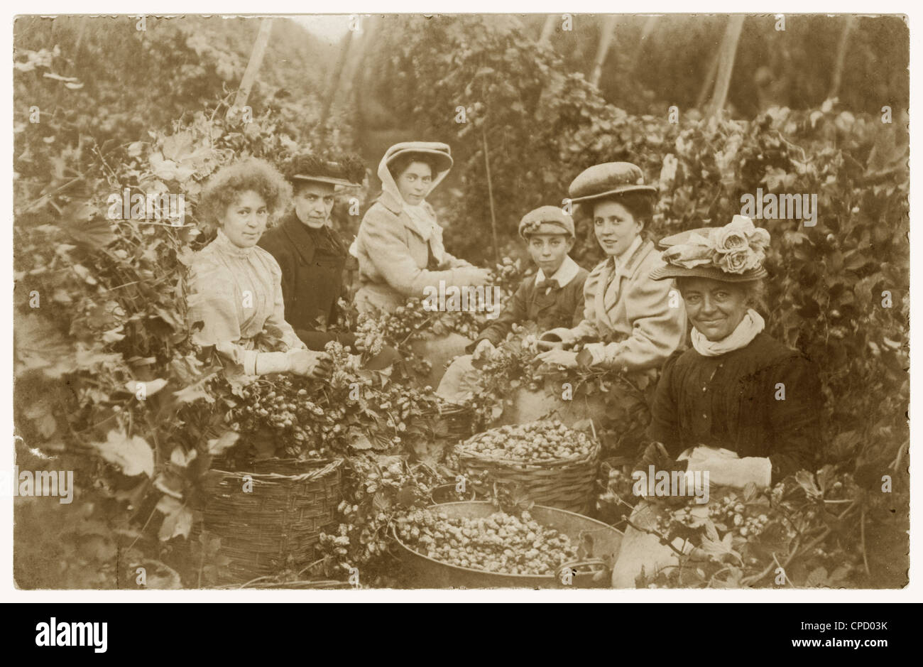 Edwardian postcard of hop pickers, on working holiday, possibly in Kent, U.K - Stock Image