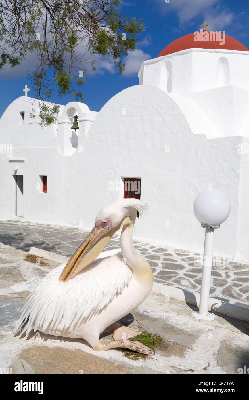 White pelican in Mykonos Town, Island of Mykonos, Cyclades, Greek Islands, Greece, Europe - Stock Image