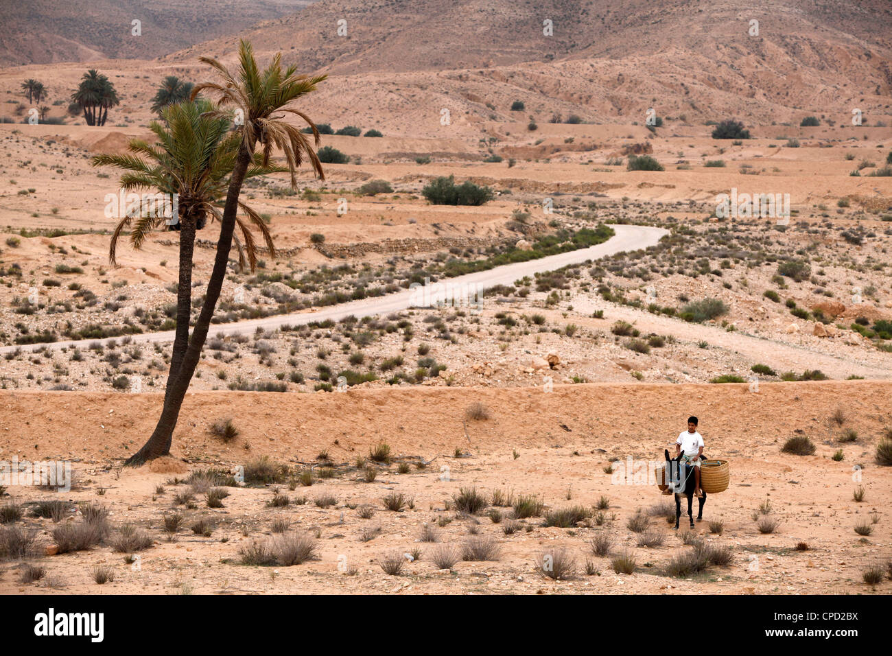 Boy on a donkey in a parched landscape, Gabes, Tunisia, North Africa, Africa - Stock Image