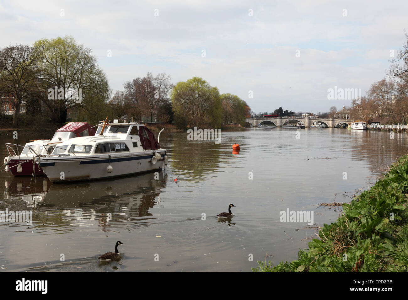 Boats and Canada geese on the River Thames, crossed by Richmond Bridge, Richmond, London, England, United Kingdom, Stock Photo