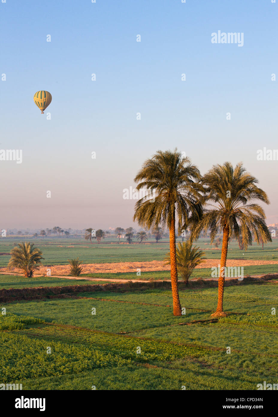 Hot air balloon suspended over green fields and palm trees near Luxor, Thebes, Egypt, North Africa, Africa - Stock Image