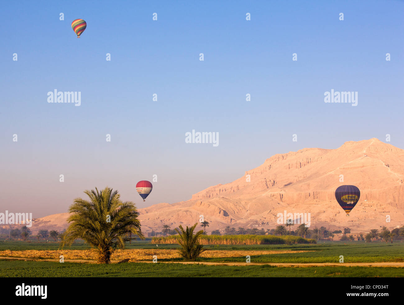 Hot air balloons suspended over green fields and palm trees near Luxor, Thebes, Egypt, North Africa, Africa - Stock Image