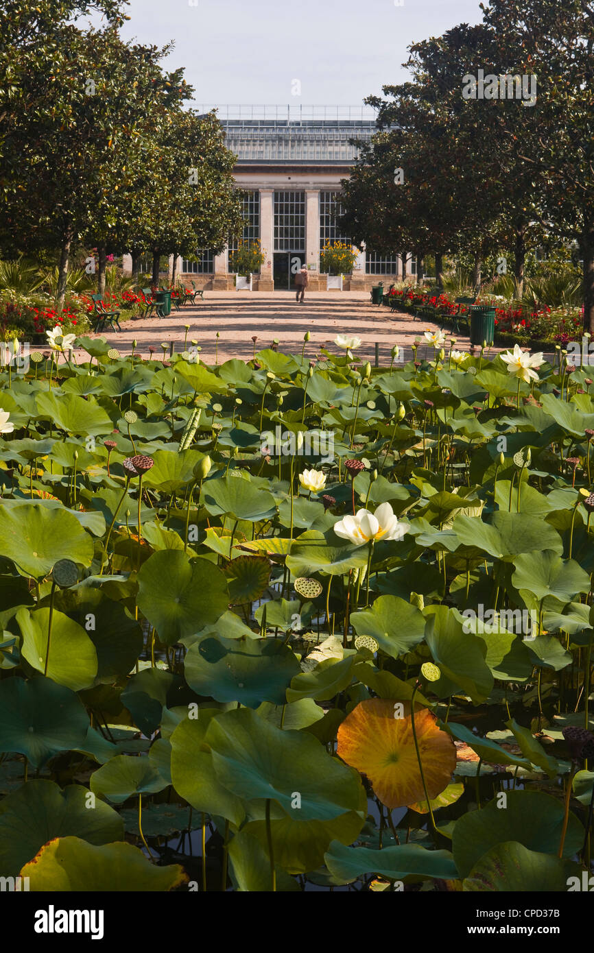 Water lilies in the Jardins Botanique (Botanical Gardens), Tours, Indre et Loire, Centre, France, Europe - Stock Image
