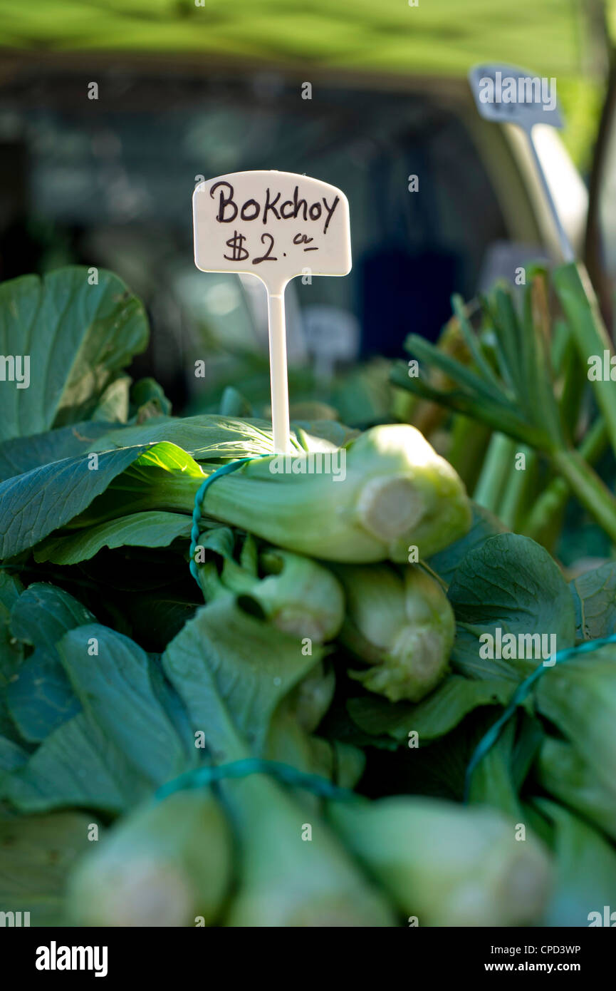 A sign for bok choy at a farmer's market - Stock Image