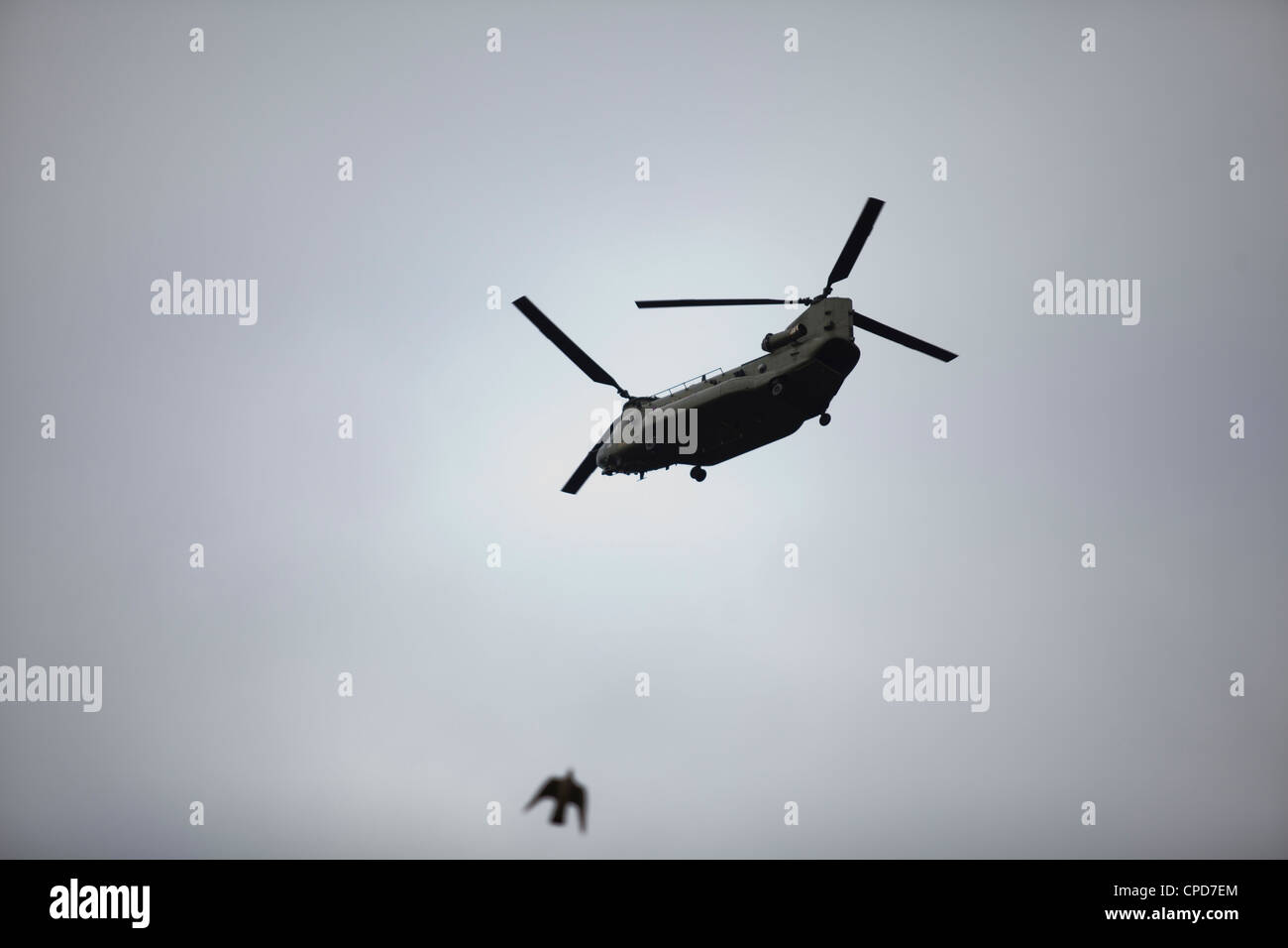 A military helicopter flying in the sky as a bird flies by - Stock Image