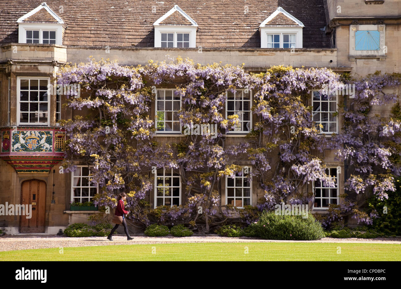 A student walks past the wisteria in spring, Christs College Cambridge UK - Stock Image