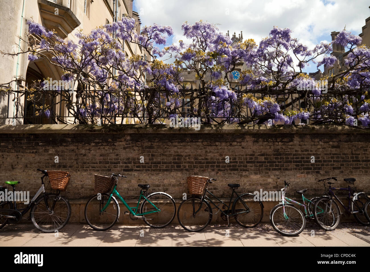 Bicycles against the wall of Sidney Sussex college in spring with wisteria, Sidney St, Cambridge UK Stock Photo