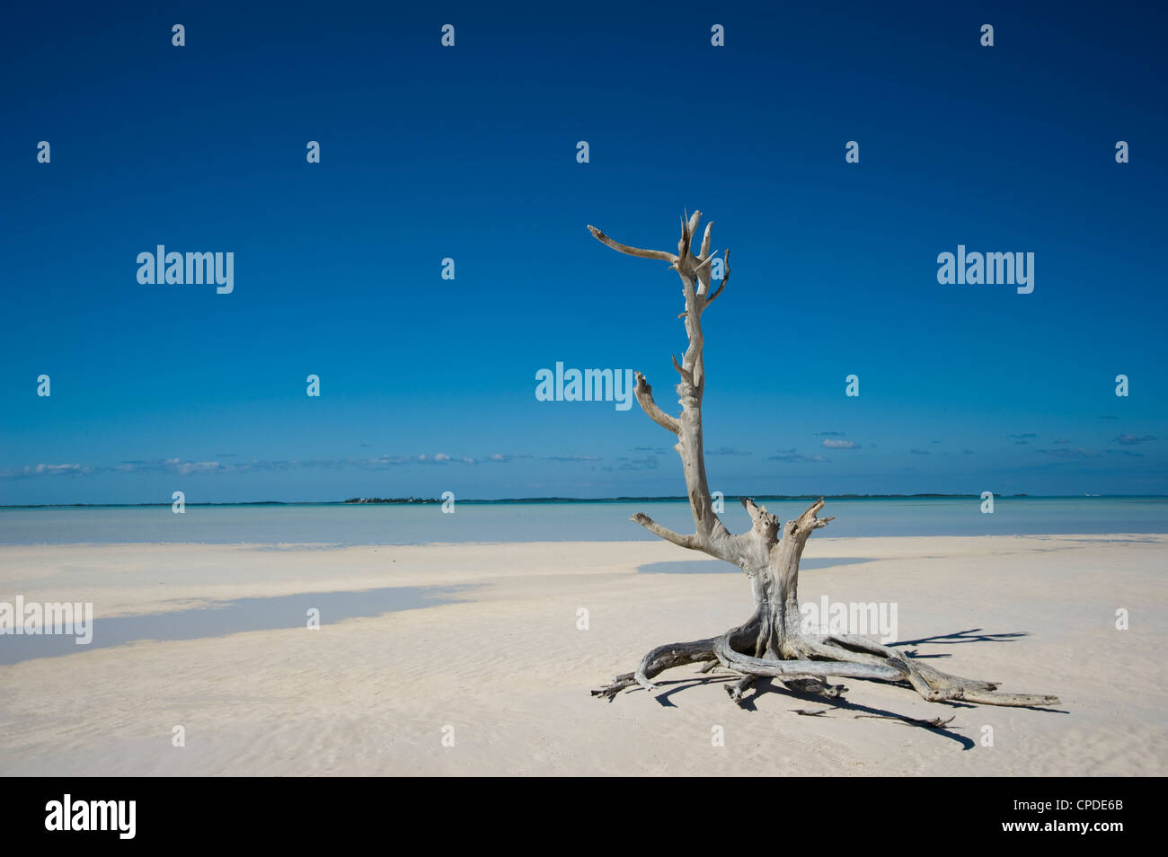 A driftwood tree in the water near Harbour Island, Eleuthera, The Bahamas, West Indies, Atlantic, Central America - Stock Image