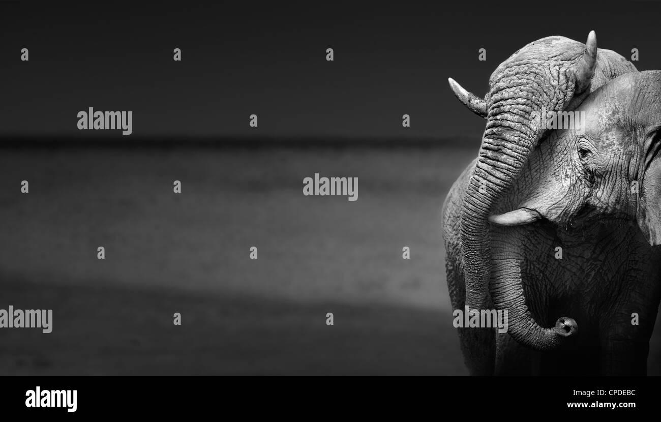 Elephants interacting (Artistic processing) - Stock Image