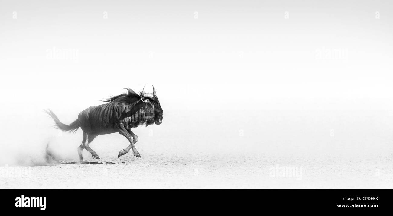 Blue wildebeest in the desert (Artistic processing) - Stock Image