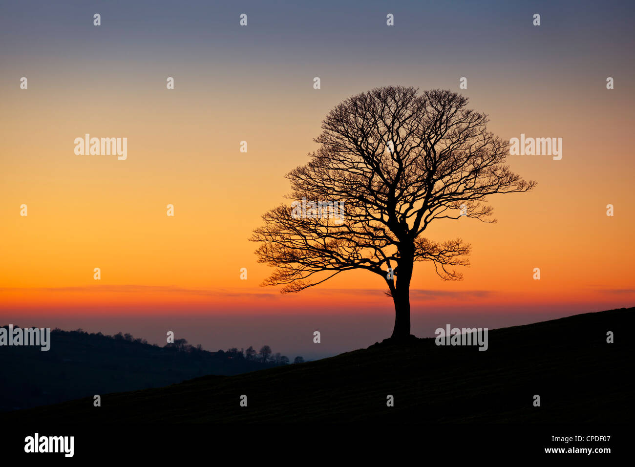 Lone tree empty of leaves in winter at sunset in the Roaches near Leek, Staffordshire, England, United Kingdom, - Stock Image