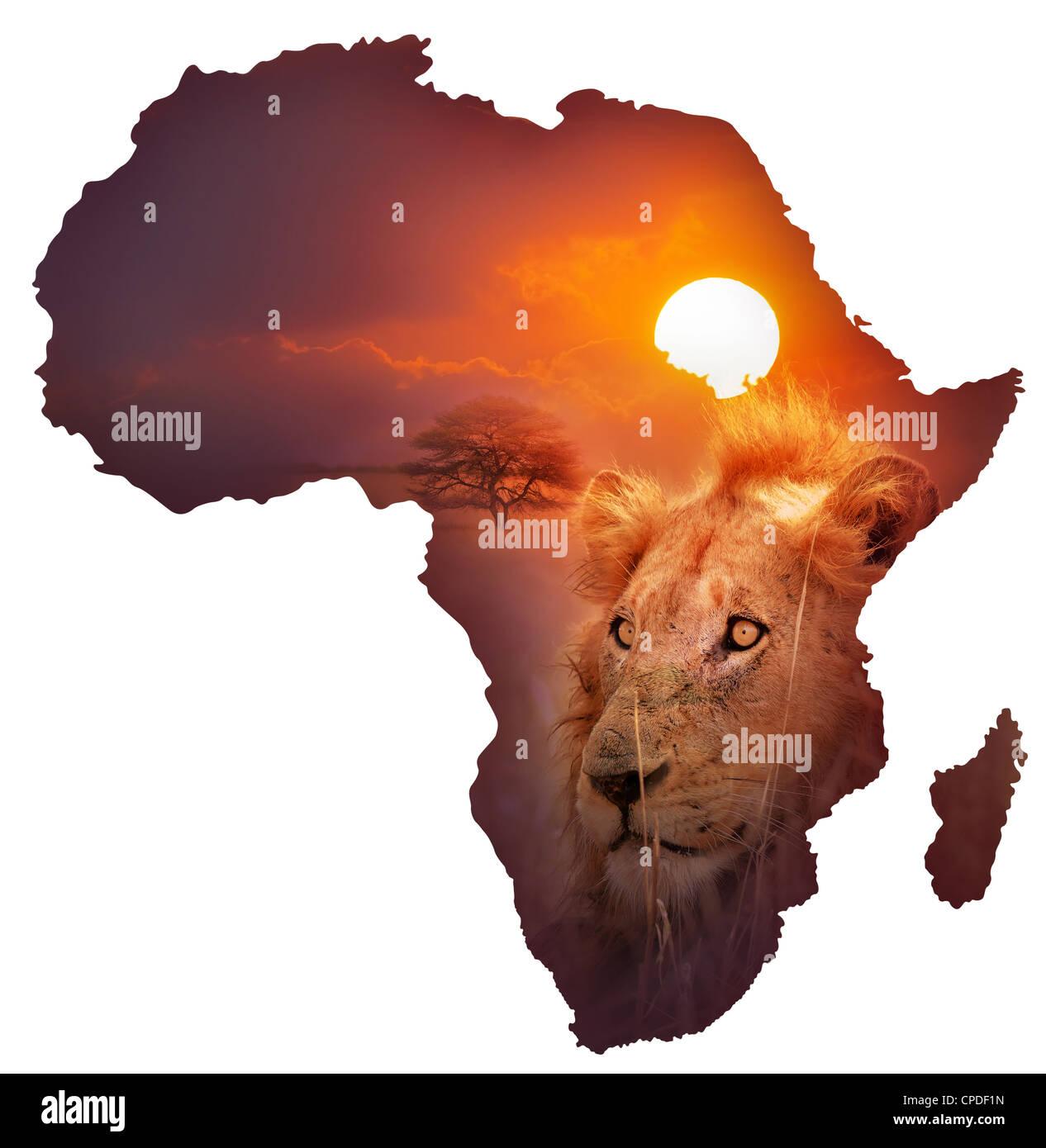 Africa Wildlife Map Design Isolated on White Stock Photo 48240353