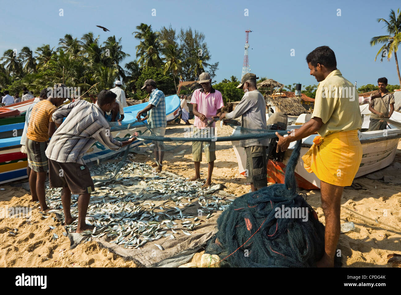 Fishermen with fish in nets on this popular surf beach, badly hit by the 2004 tsunami, Arugam Bay, Eastern Province, - Stock Image