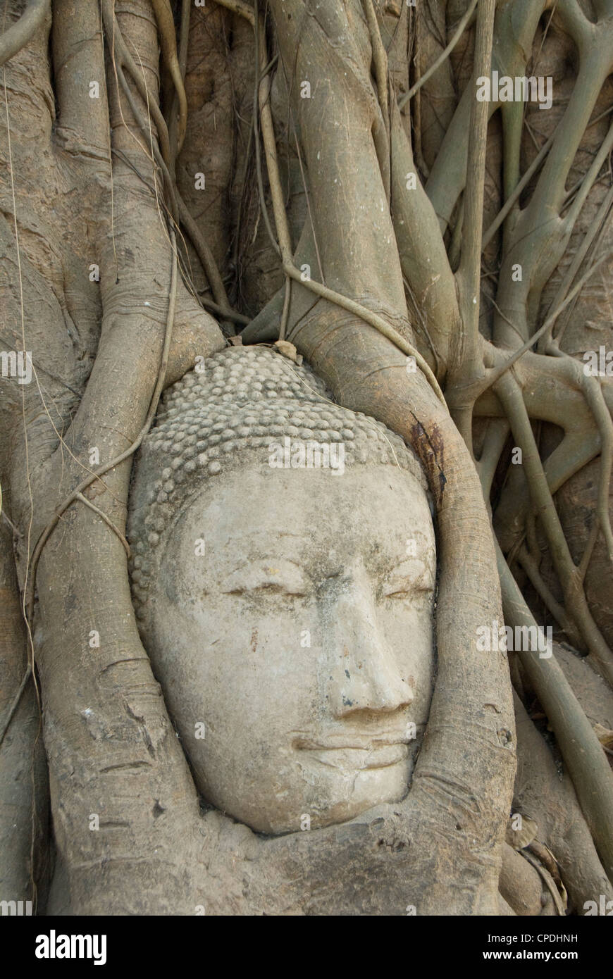 Buddha head, Wat Mahathat, Ayutthaya, UNESCO World Heritage Site, Thailand, Southeast Asia, Asia Stock Photo