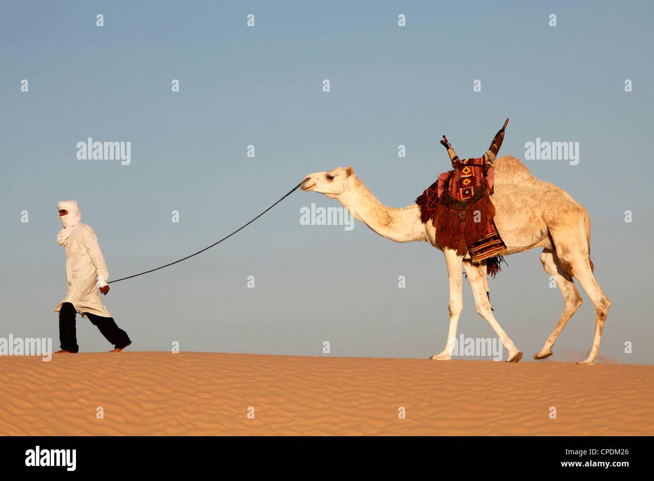 Camel driver in the Sahara desert, near Douz, Kebili, Tunisia, North Africa, Africa - Stock Image