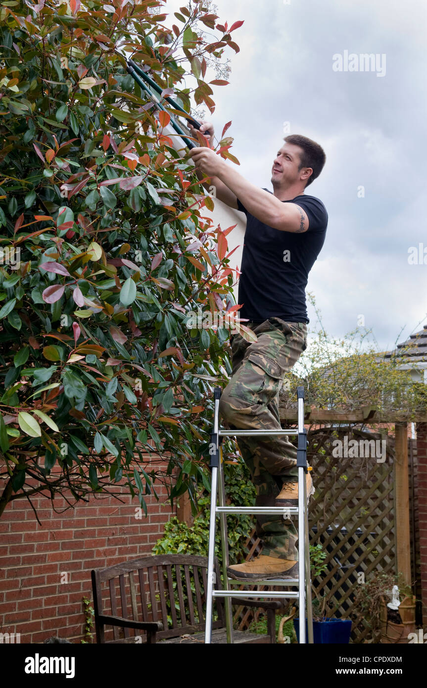 Caucasian Man Chopping Tree Branches On Ladder With Long Handled Stock Photo Alamy