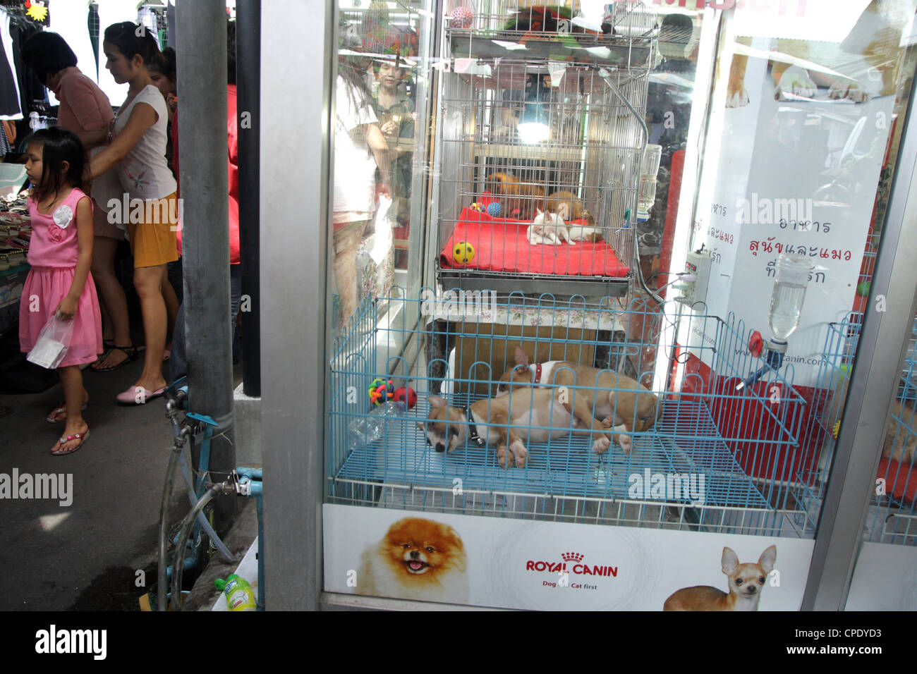 Puppies sleeping in pet shop , Chatuchak Weekend Market , Bangkok - Stock Image
