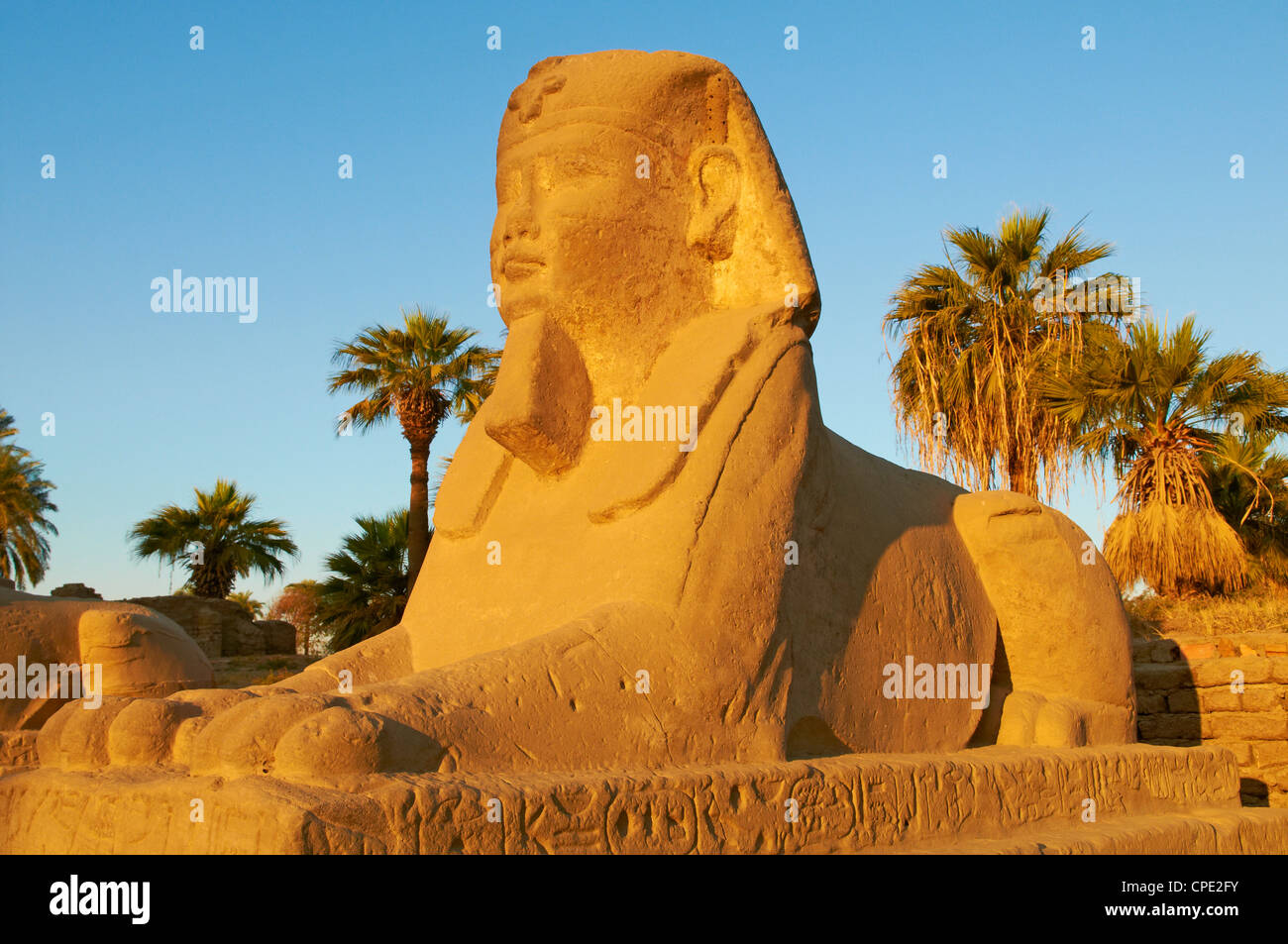 Sphinx path, Temple of Luxor, Thebes, UNESCO World Heritage Site, Egypt, North Africa, Africa - Stock Image