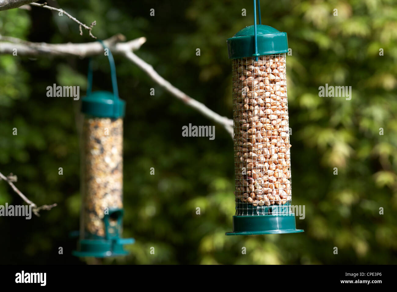 birder birds winter bird the unlimited this feeding feeders share prairie in img feeder