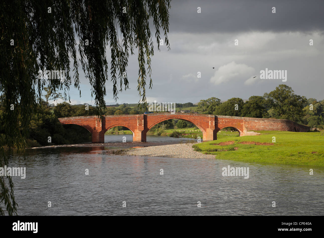 Willow over The Eden Bridge, Lazonby, Eden Valley Cumbria England UK - Stock Image
