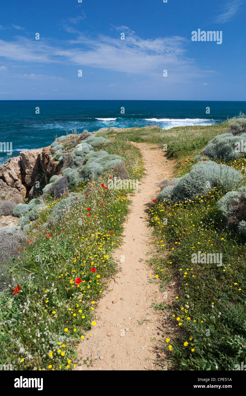Coastal path with spring flowers, near Chania, Chania region, Crete, Greek Islands, Greece, Europe Stock Photo