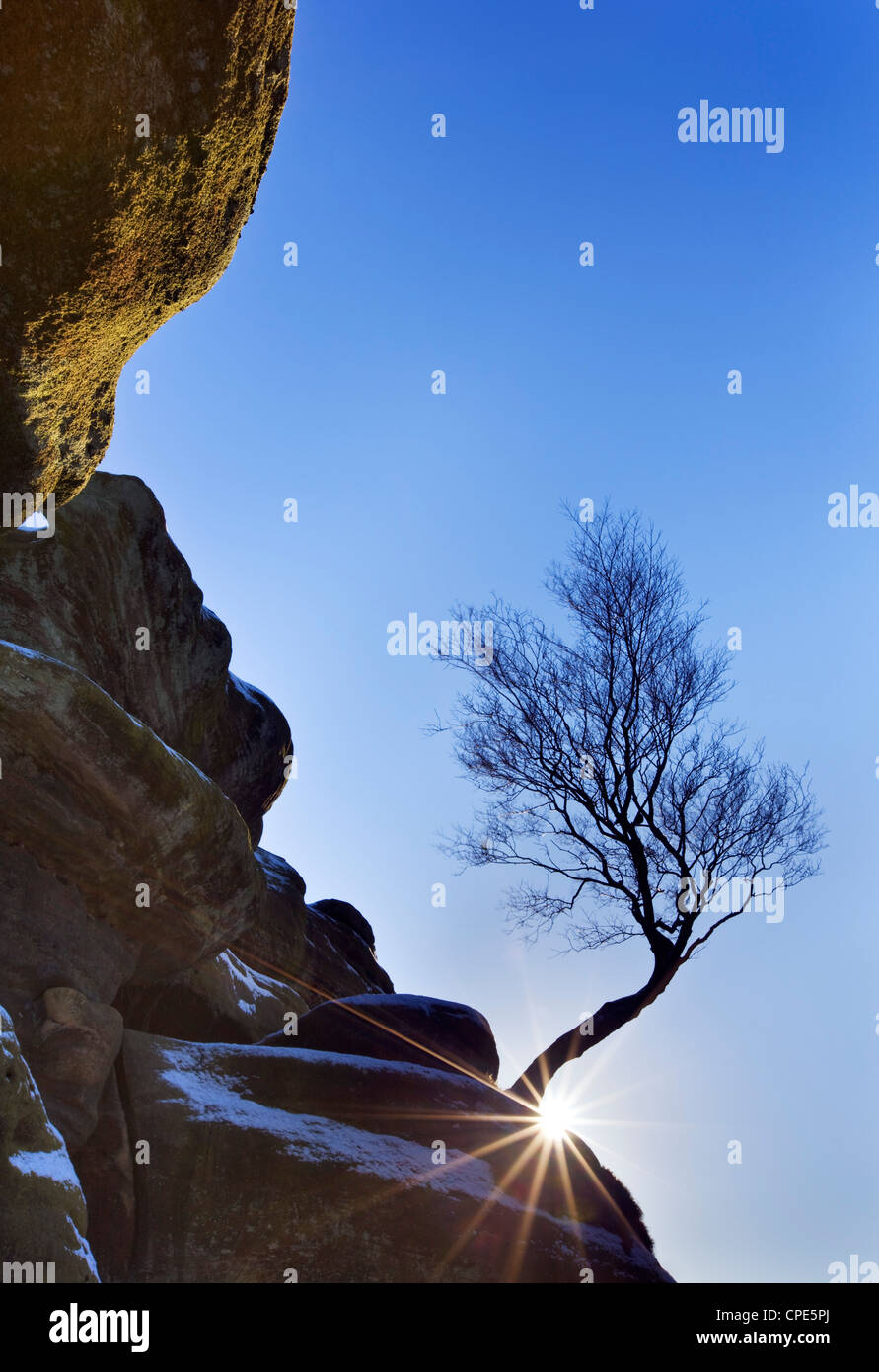Sunburst behind a lone tree and a sprinkling of snow at Brimham Rocks, Yorkshire, England, United Kingdom, Europe - Stock Image