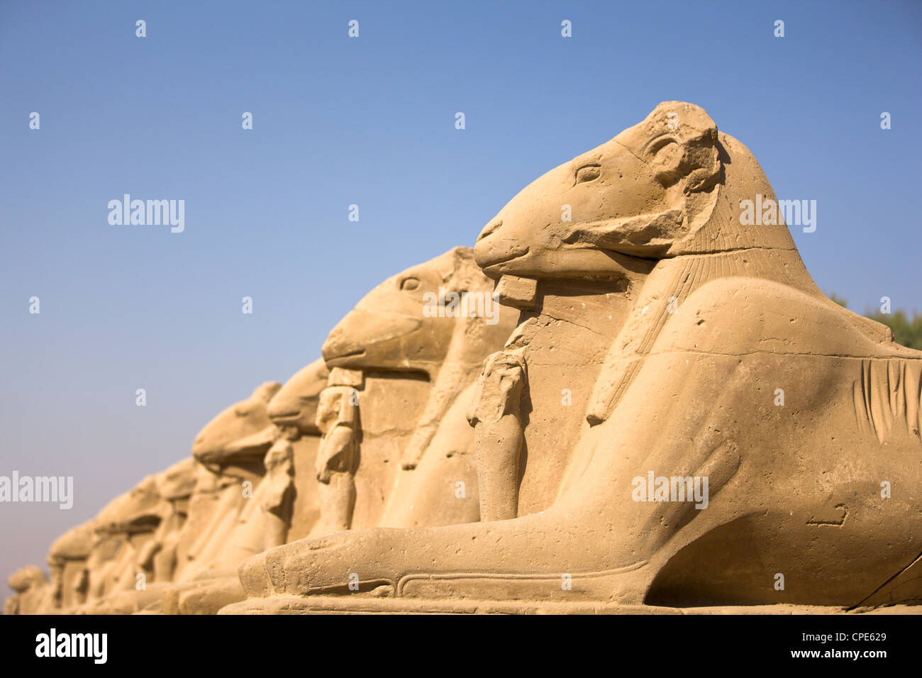 Ram headed sphinxes leading up to the first pylon at Karnak Temple, Karnak, Thebes, UNESCO World Heritage Site, - Stock Image