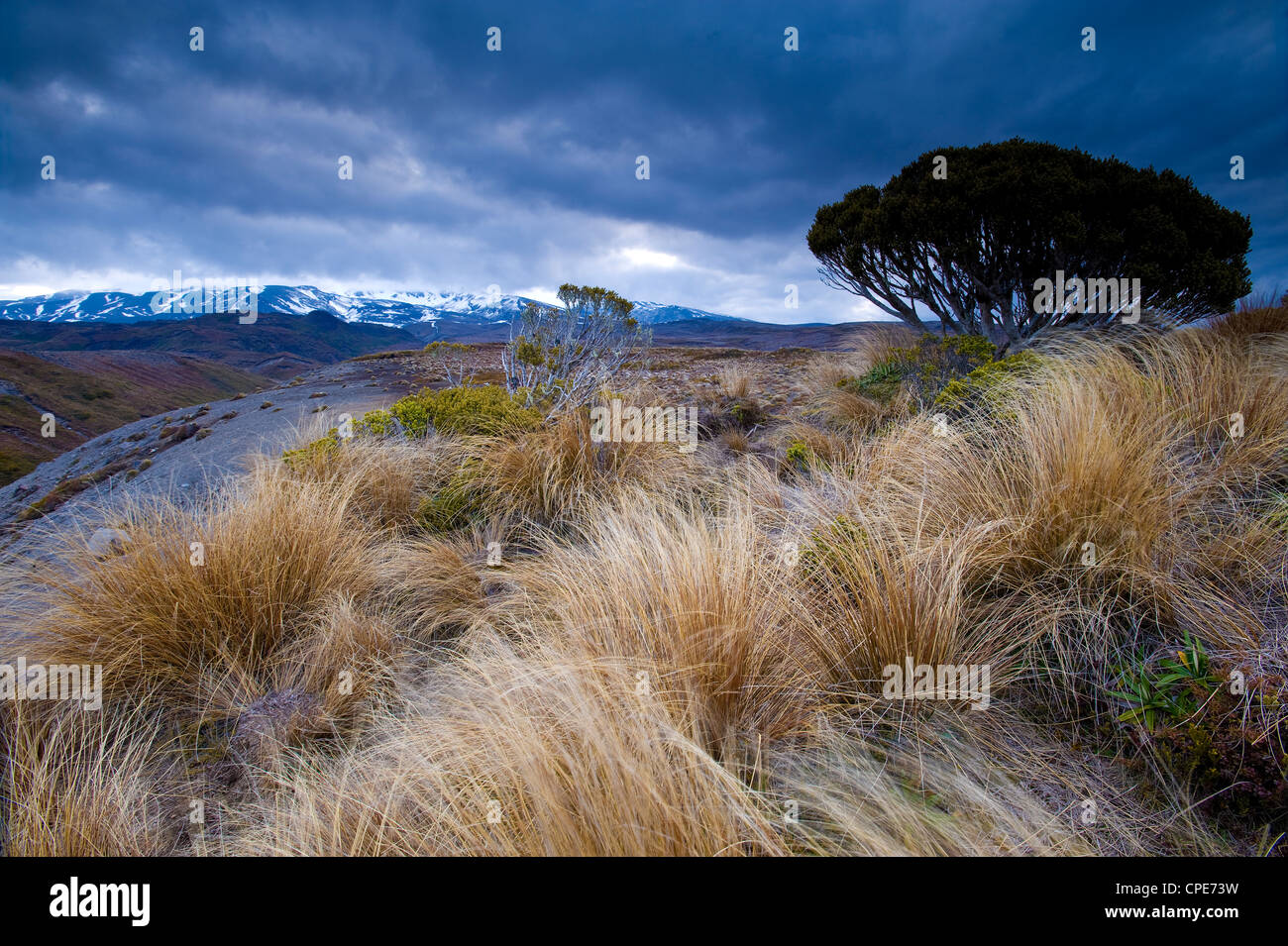 Tongariro National Park, UNESCO World Heritage Site, North Island, New Zealand, Pacific - Stock Image