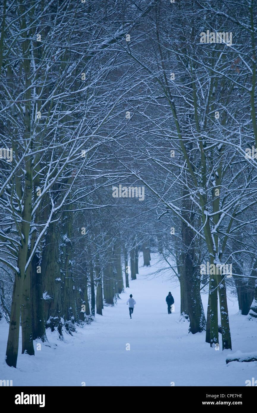 Hampstead Heath in winter, London, England, United Kingdom, Europe - Stock Image