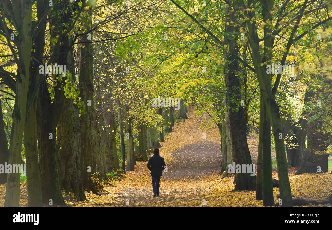 Hampstead Heath, North London, England, United Kingdom, Europe - Stock Image