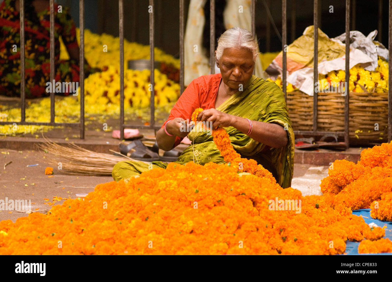 Elderly woman stringing marigold flowers into garlands in the market, Bangalore, Karnataka, India, Asia - Stock Image