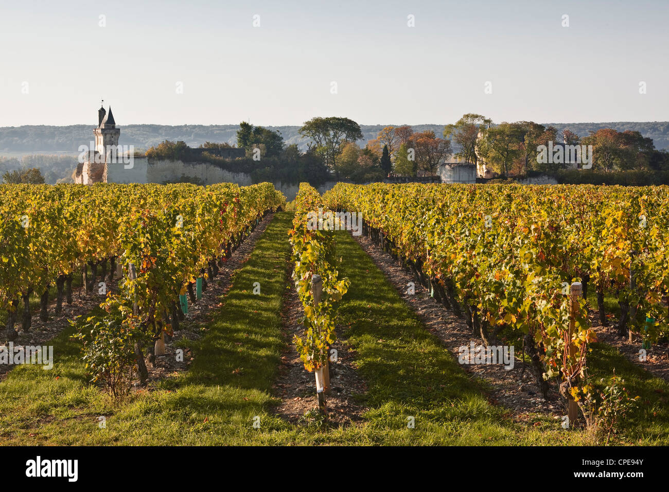 Vineyards near to the chateau of Chinon, Indre-et-Loire, Loire Valley, France, Europe - Stock Image