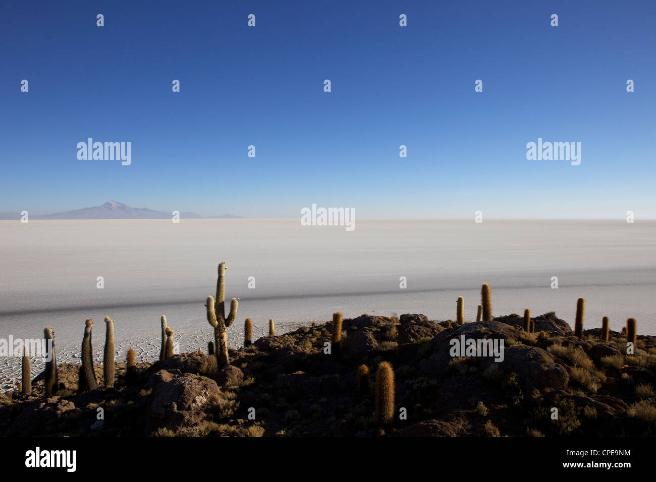 Cacti on Isla de los Pescadores, and salt flats, Salar de Uyuni, Southwest Highlands, Bolivia, South America - Stock Image