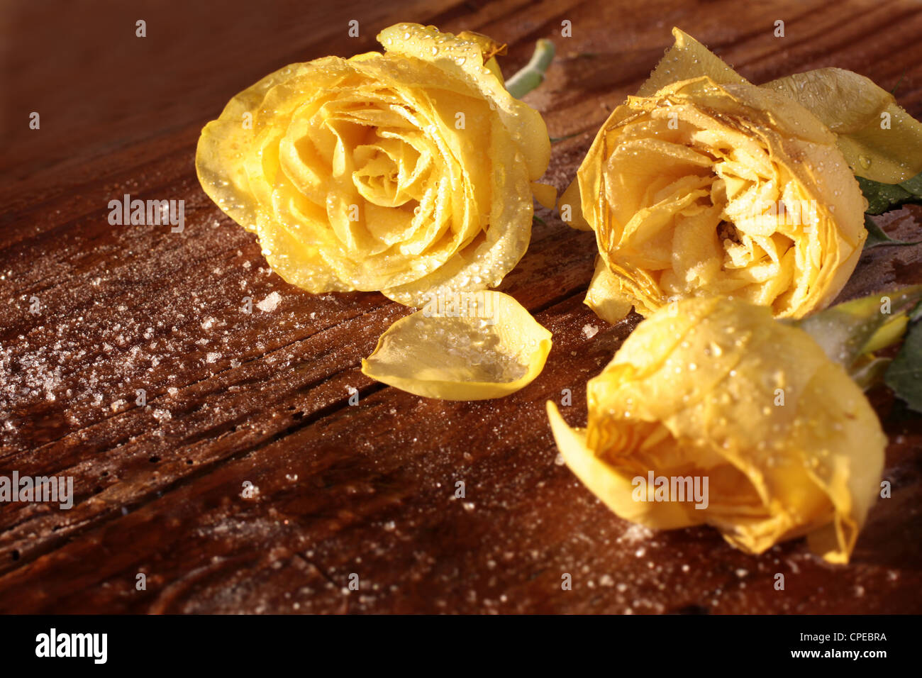 Frozen yellow roses on a rustic wooden table - Stock Image