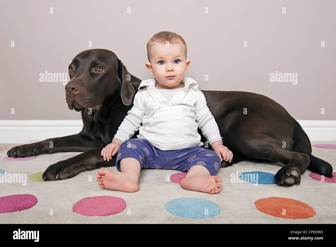 Cute Baby With Her Chocolate Labrador Pet Stock Photo Alamy