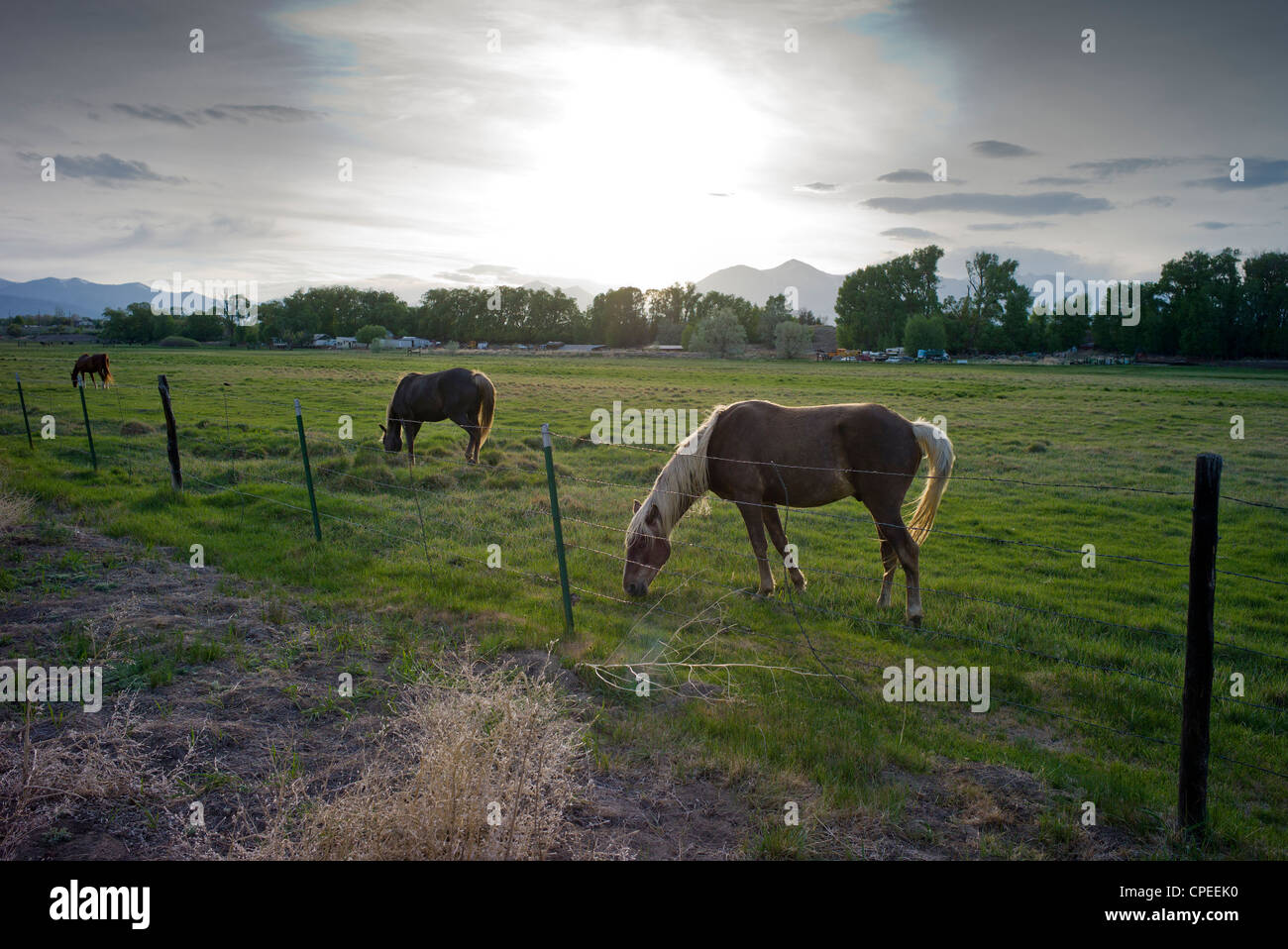 Horses grazing in pasture on fringe of the small mountain town of Salida, Colorado, USA Stock Photo