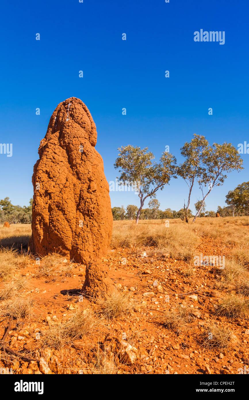 A Large Termite Mound In The Kimberley Region Of Western Australia Stock Photo Alamy